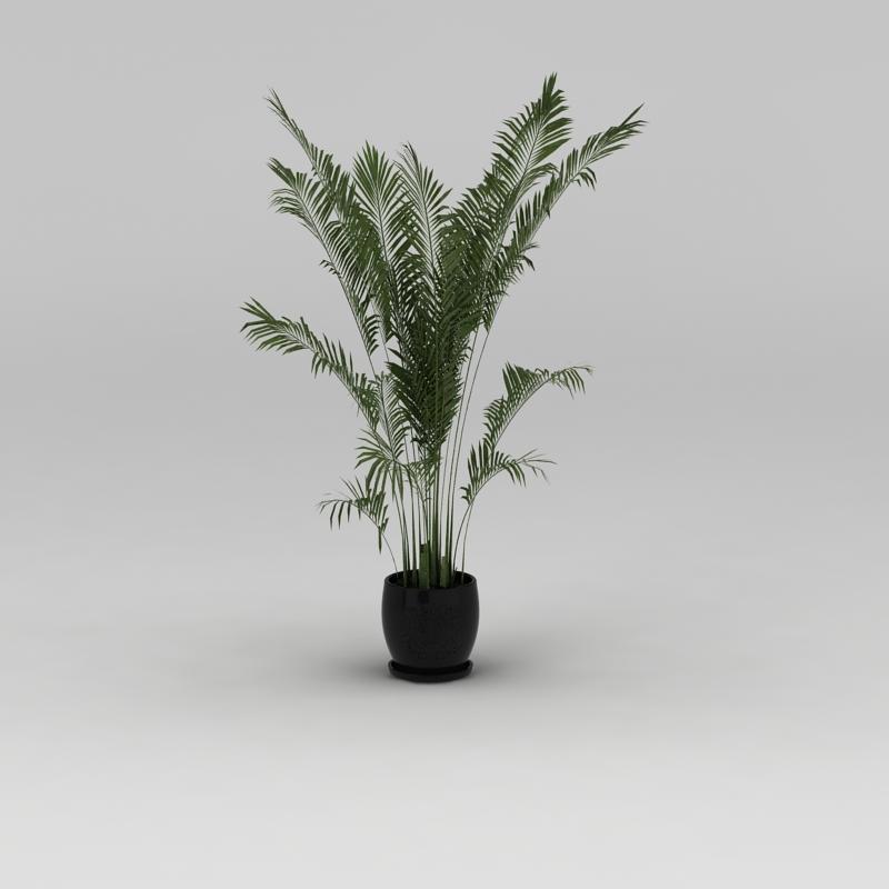 室内花盆绿植散尾葵3D模型下载-图1