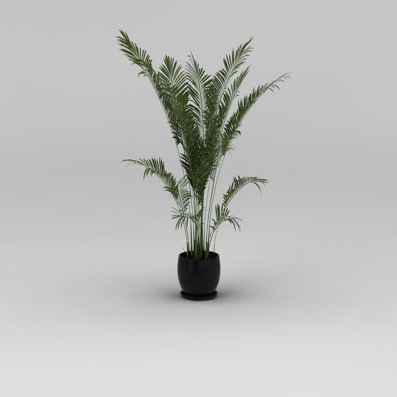 室内花盆绿植散尾葵3D模型下载-图3