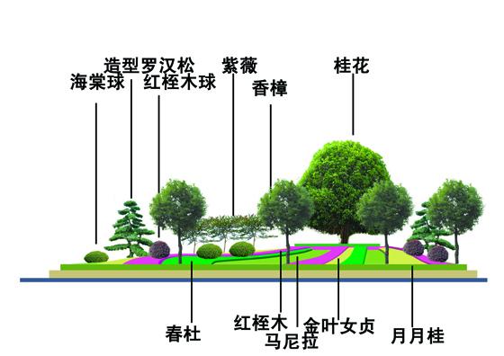 园林植物手绘平面图
