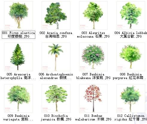 园林手绘素材 手绘植物立面图 园林景观手绘素材 景观植物手绘平面图