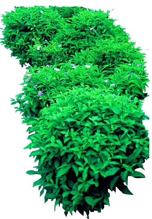 园林cad植物素材 景观植物素材 植物平面素材 cad植物素材库  所属