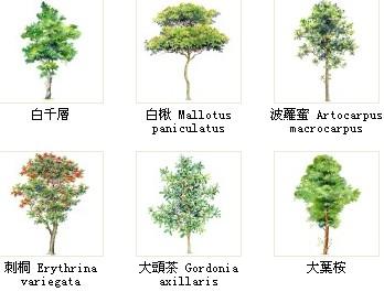 高清晰ps用手绘植物【绝对经典】