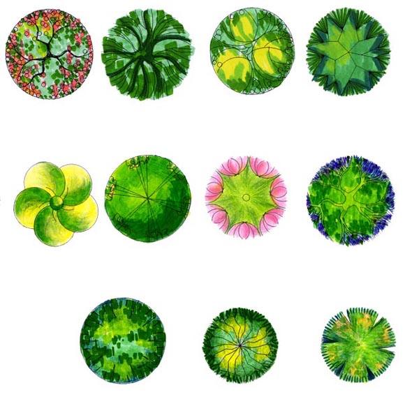 园林植物平面效果图