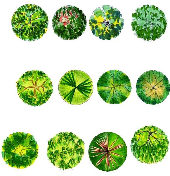 植物平面效果图