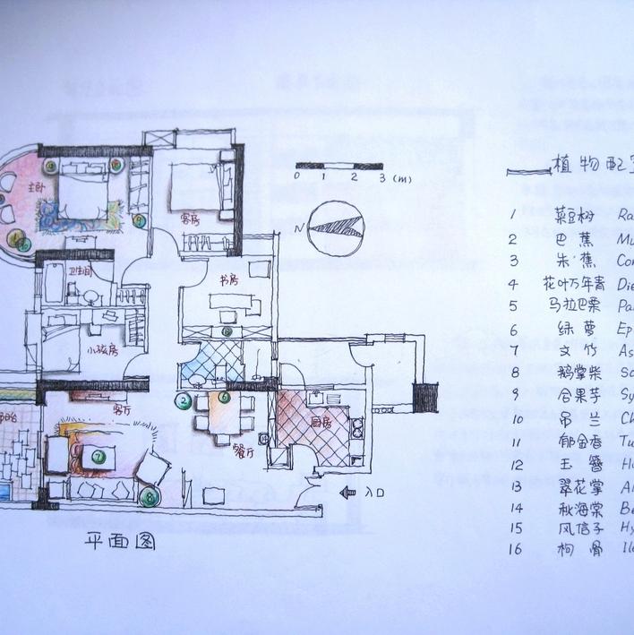 3         我自己的手绘作业 ,某住宅室内植物应用的设计,平面图,效果