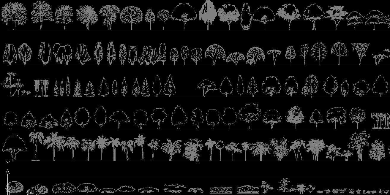 速写手绘树木立面图