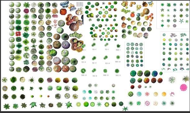 图纸 园林设计图 园林景观素材 植物素材图例 园林植物平面素材彩图