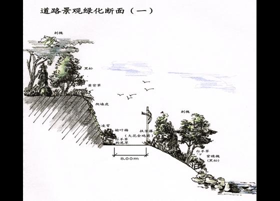 环山路植物设计手绘图