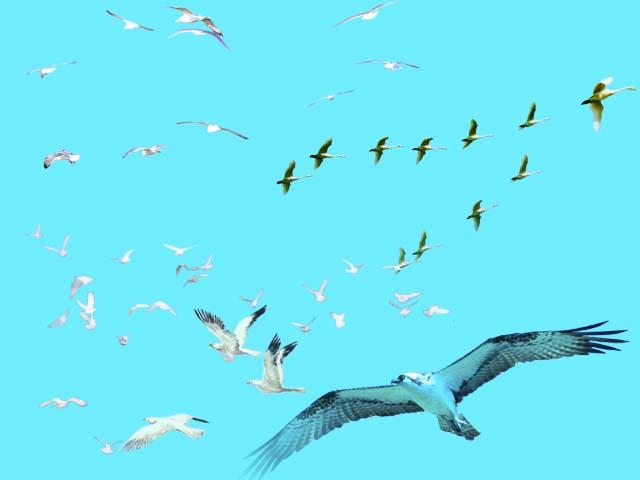 室外后期处理鸟的素材(psd)