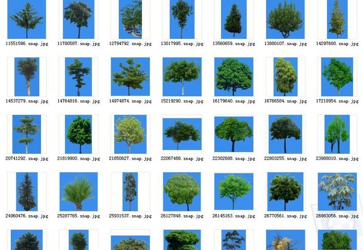 园林景观素材(cad园林素材)  植物素材图例(植物素材)  后期素材乔木
