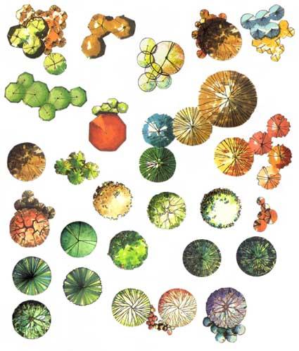 园林植物彩色平面素材