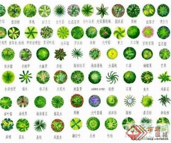 植物图例(全1)