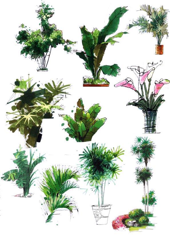 图纸 园林设计图  手绘园林效果图   一些园林手绘的树木表现方法和