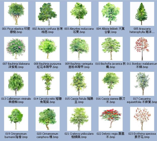 手绘植物(带植物名称)2