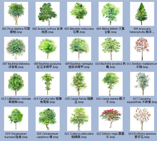 手绘植物立面图 景观植物手绘平面图 道路绿化带植物 阔叶植物名称 地