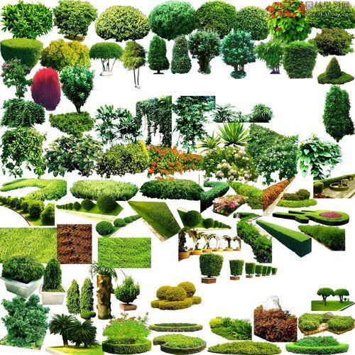 图纸 园林设计图 园林景观素材 植物素材图例 花灌木花镜图例若干
