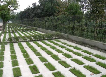 图纸 园林设计图 道路地面铺装 停车场 停车场施工图  投稿网友:chen