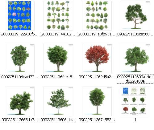 树种平面图