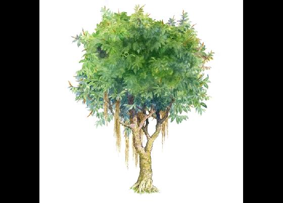 手绘园林植物立面图百例