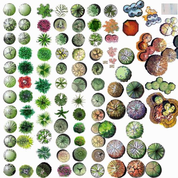 植物手绘平面  相关专题:景观植物手绘平面图 手绘植物立面图 手绘