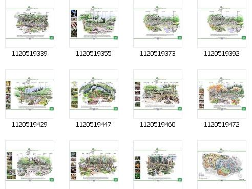 手绘图  所属分类:广场绿化设计