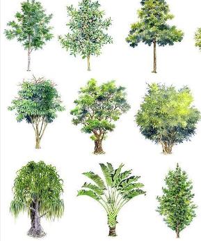 在手绘立体效果图中所需要的树图例