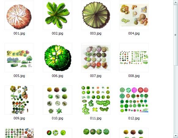 手绘植物平面