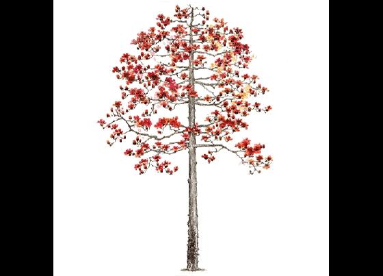 景观手绘树效果图