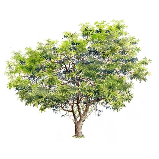 手绘牌坊 手绘总图 手绘立面 手绘亭子  所属分类:园林设计图  手绘的