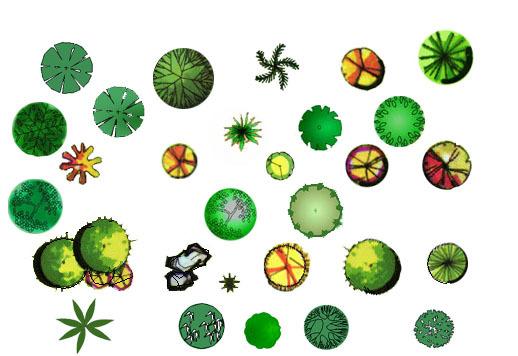 灌木平面植物图例