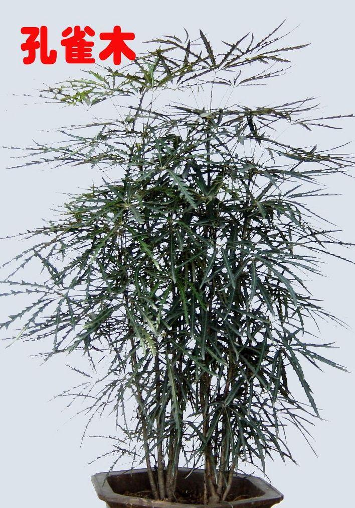室内植物图