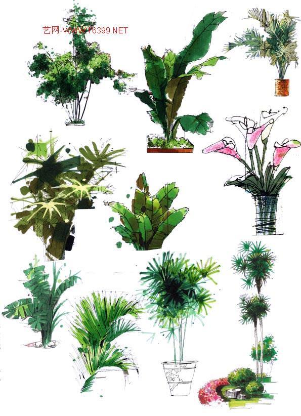 平面马克笔手绘植物