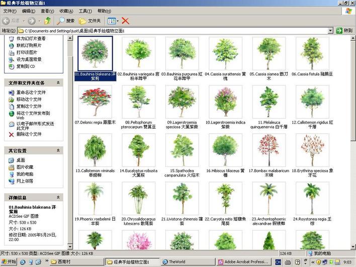 手绘植物图例彩色版