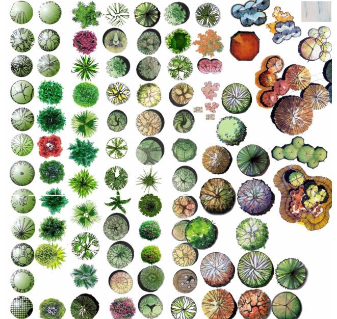 图纸 园林设计图  ps树木平面贴图    比较全的ps树木平面素材   相关
