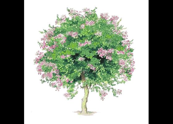 手绘树木立面图(一)