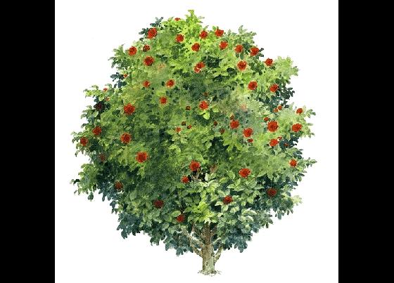手绘树木立面图 相关专题:室内手绘立面图手绘室内立面图景观手绘立面