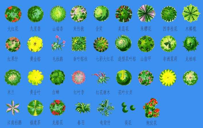 平面植物ps素材 ps后期植物素材 有用的园林植物ps素材 ps立面植物