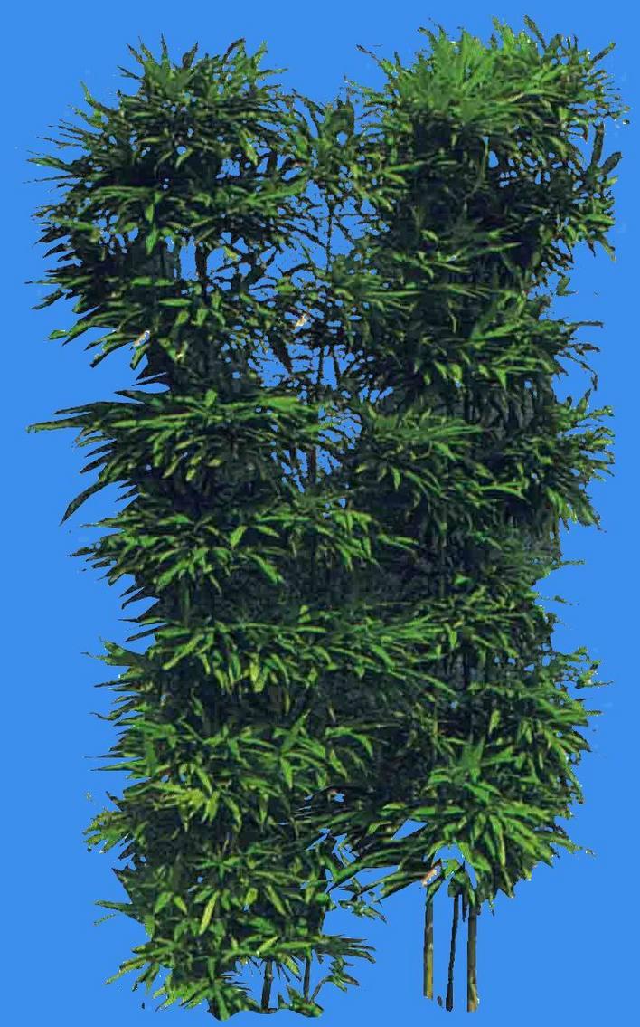 植物平面图图例竹子