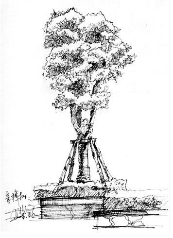 手绘建筑配景树 植物
