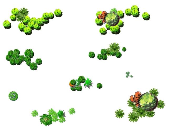 景观彩平面渲染的植物图例