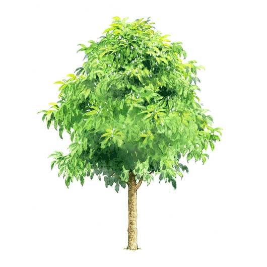 我搜集了一些植物素材,都是很经典很好用的立面植物素材!