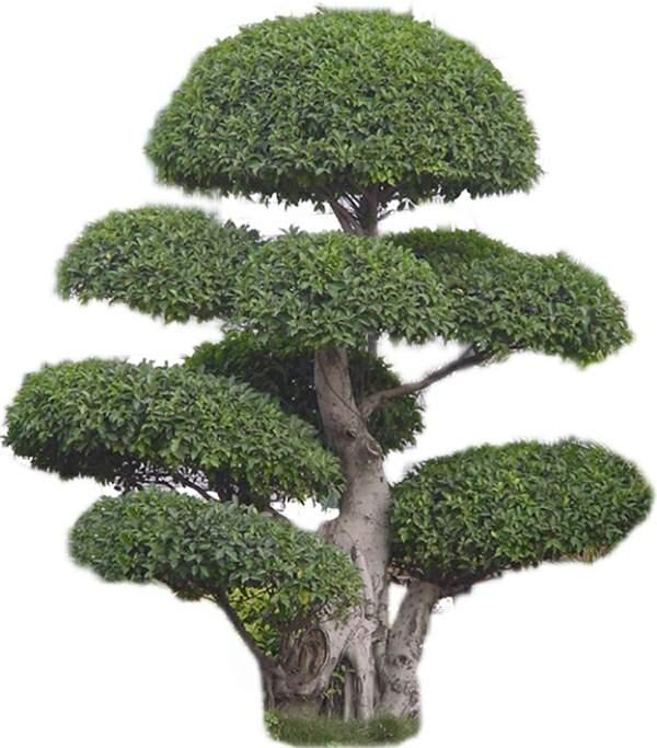 造型 相关专题:景观植物cad景观植物图库景观植物cad图库景观植物素材