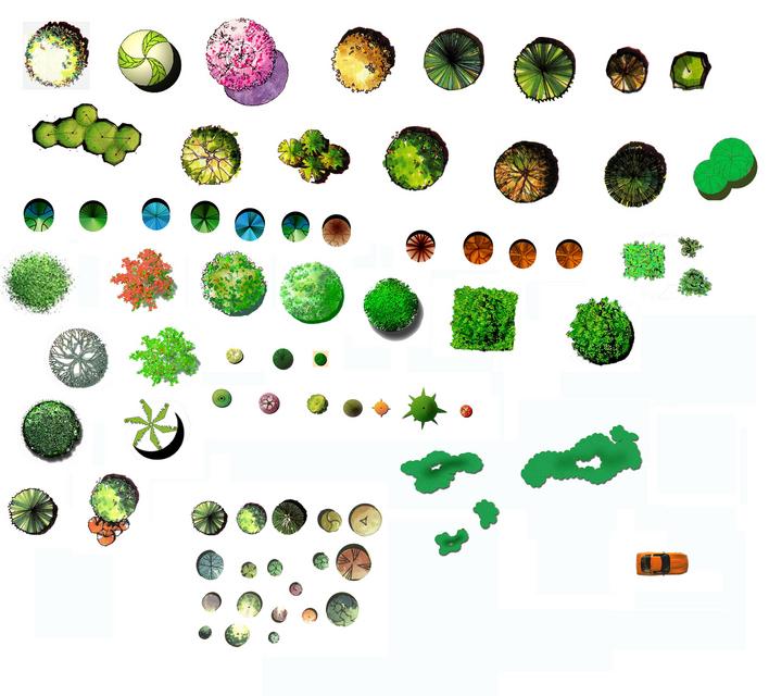 彩色平面图植物cad平面图景观植物平面图地被植物