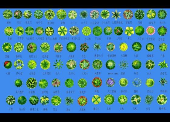 图块手绘图标 ps植物平面图块1乔木 f:ps植物平面图块植物图例 各