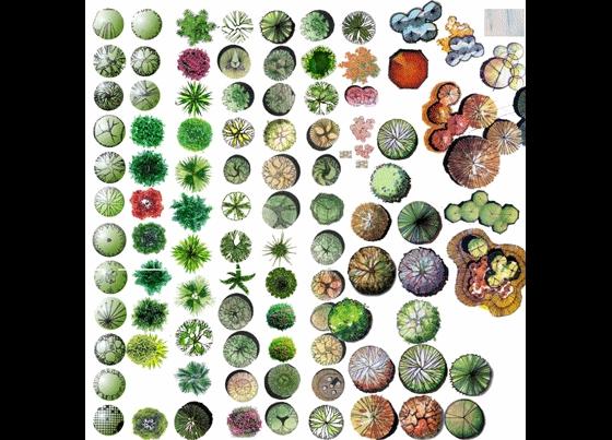 ps植物平面图块小品花草集
