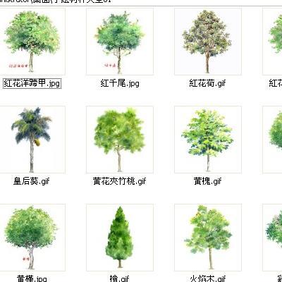 手绘树种大全I PS专用超清晰图片