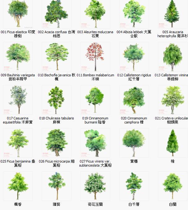 手绘植物立面图 园林植物 园林植物设计图 室内手绘立面图 景观手绘