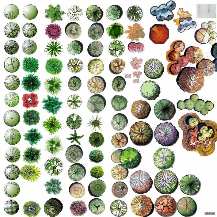 ps植物平面图