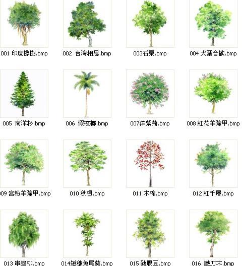 图纸 园林设计图 手绘乔木带植物名称5  上传时间:2008-11-06 所属