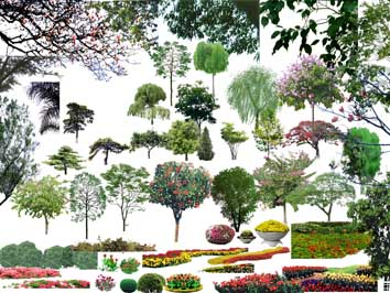 北京某住宅小区全套景观设计施工图第4卷 ps立面植物素材 cad北方植物